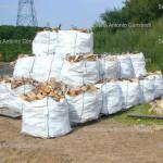 sacconi legna